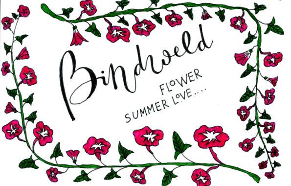 bindweed