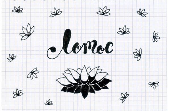 lotos2